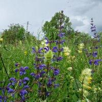 Есть особая прелесть в цветах полевых ... :: Galina Dzubina