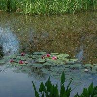 озеро с кувшинками :: Олег Кручинин
