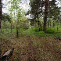 После дождя... :: Влад Никишин