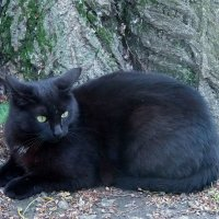 Кот,который гуляет сам по себе! :: Наталья