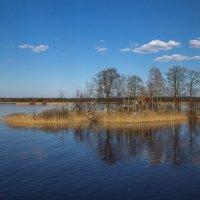 Островок свободы :: Светлана Шмелева