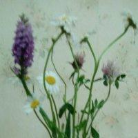Полевые цветы. Лето 2016 г.. :: Светлана Калмыкова