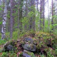 И на камнях растут деревья! :: Галина Полина