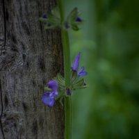 зеленый и древесный :: Софья Оганова