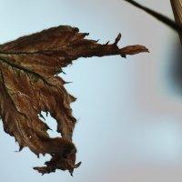 Реки, или Клочок старой шкурки, сброшенный линяющей картой. :: Ирина Сивовол