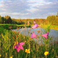 А на берегу цветы необычайной красоты :: Павлова Татьяна Павлова