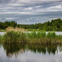 На озере :: Elena Ignatova