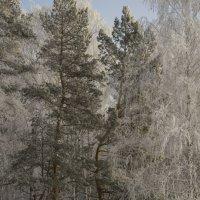 Зимний лес :: Андрей