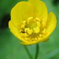 Цветок :: Анастасия Самосватова