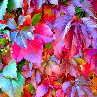 Разноцветная осень... :: Галина Стрельченя