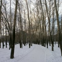 Зимний парк... :: Алёна Савина