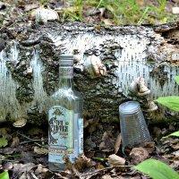 На лесной опушке. :: Михаил Столяров