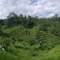 Бали. :: Александр