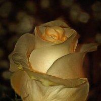 Красота спасёт мир, если в ней живёт ЛЮБОВЬ...... :: Tatiana Markova