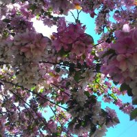 В тени цветущих ветвей :: Владимир Звягин
