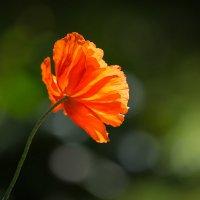 Аленький цветок. :: Юрий