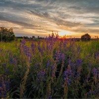 Летний вечер перед грозой... :: Александр Никитинский