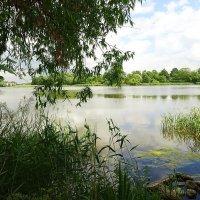 Чистый пруд в июньском одеянии :: Маргарита Батырева