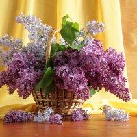 Сиреневый май. :: alfina