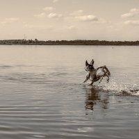 Бегущая по волнам :: Елена Пономарева