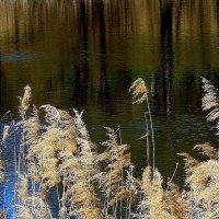 Акварельное озеро с голубым  лоскутком... :: Валерия  Полещикова