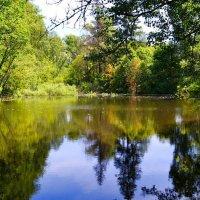 Озерцо в лесной тишине :: Милешкин Владимир Алексеевич