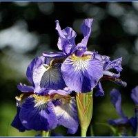 Цветок как он есть в своём бокЕ. :: Владимир Гилясев