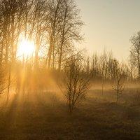 Радужное утро :: Светлана Шмелева