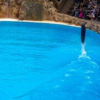 Шоу с дельфинами в Лора Парке :: Witalij Loewin