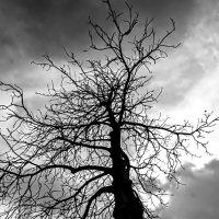 Дерево :: Светлана Щербакова