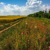 Земля кормилица, земля красавица... :: Юрий Шапошник