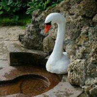 печальная птица Лебедь.. :: НикЛеод
