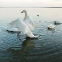 Озеро Нарач. :: Надежда Акушко