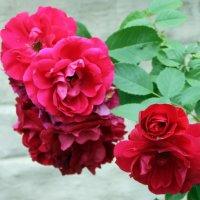 Велик создатель, мир сей сотворив! :: Валентина ツ ღ✿ღ