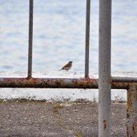 Птица :: Нина Алексеева