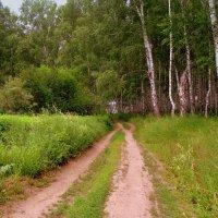 Лесными дорогами . :: Мила Бовкун