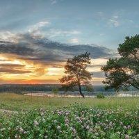 Сосны на закате :: Николай Андреев