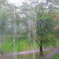 А у нас дождик... :: super-krokus.tur ( Наталья )