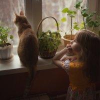 когда за окном - дождь :: Ольга Панфилова