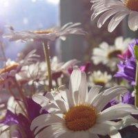 Полевые цветы :: Шура Еремеева