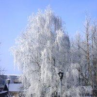 Один день зимы :: Андрей Осипов