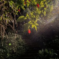 цветочек аленький,тот самый,за тридевять земель,на острове,да и лестница к нему... :: Александр
