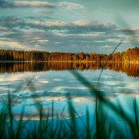 озеро Чистик (Тверская область) :: Марина Белецкая