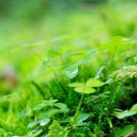 Зеленый мир :: Марина Белецкая