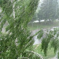 Дожди . Июнь. :: Мила Бовкун