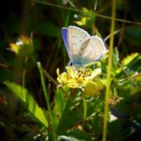 Бабочка на цветочке :: Сергей Рычков