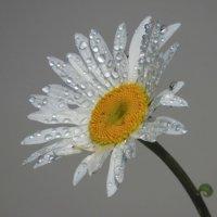Цветок :: Александр Смирнов