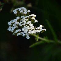 В лесной прохладе :: Татьяна