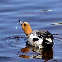 Свиязь на водах :: Дмитрий Ерохин