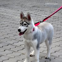 Красавица. :: Anna Gornostayeva